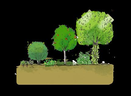 pepiniere-alveoles-permaculture