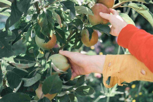 fruitiers-haie-idee
